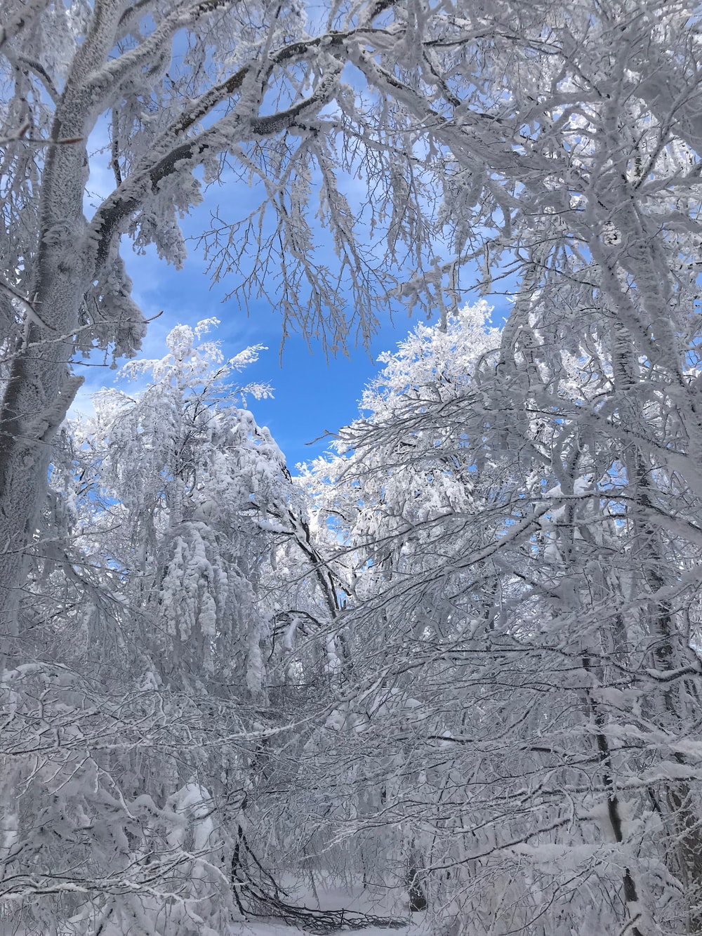 snow covered forest under blue sky at daytime