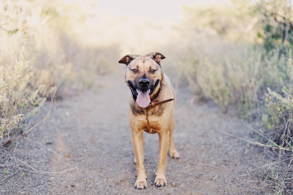 brown short coated large dog during daytime
