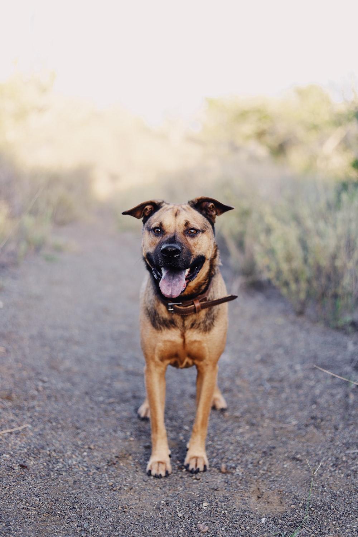 brown dog near plant