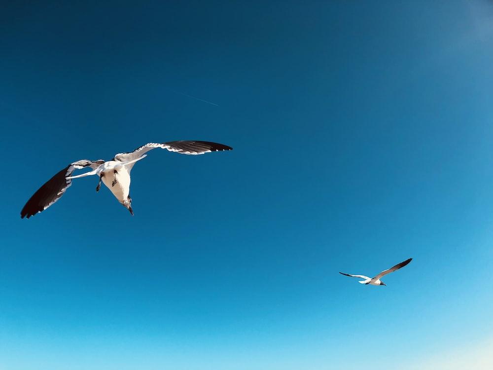 two flying white birds
