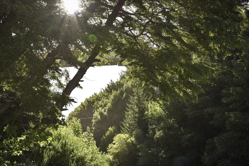 landscape photograph of trees