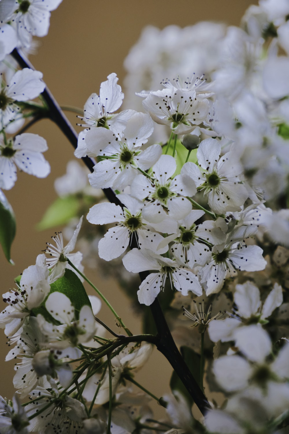 close-up photography of white flowers
