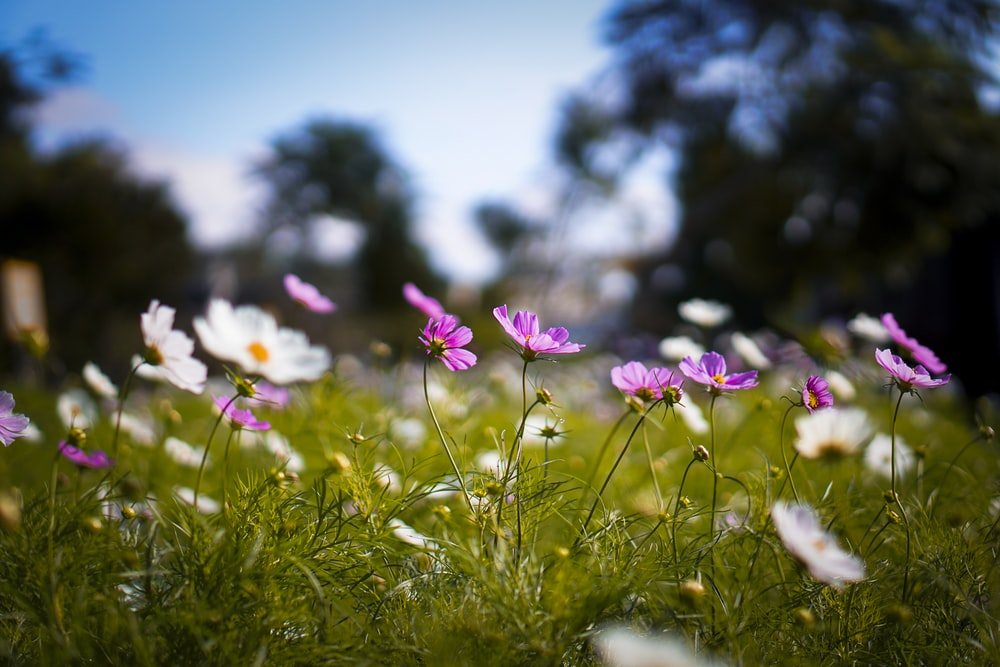 selective focus photography of purple and white flowers