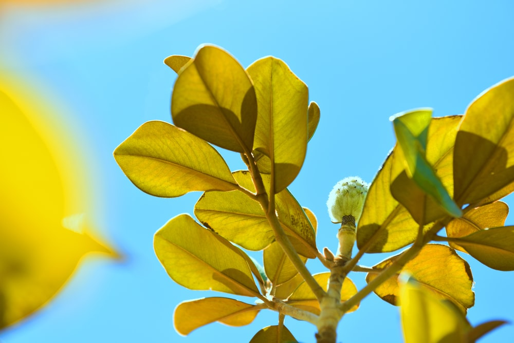 bottom view of selective focus photography of green leaves