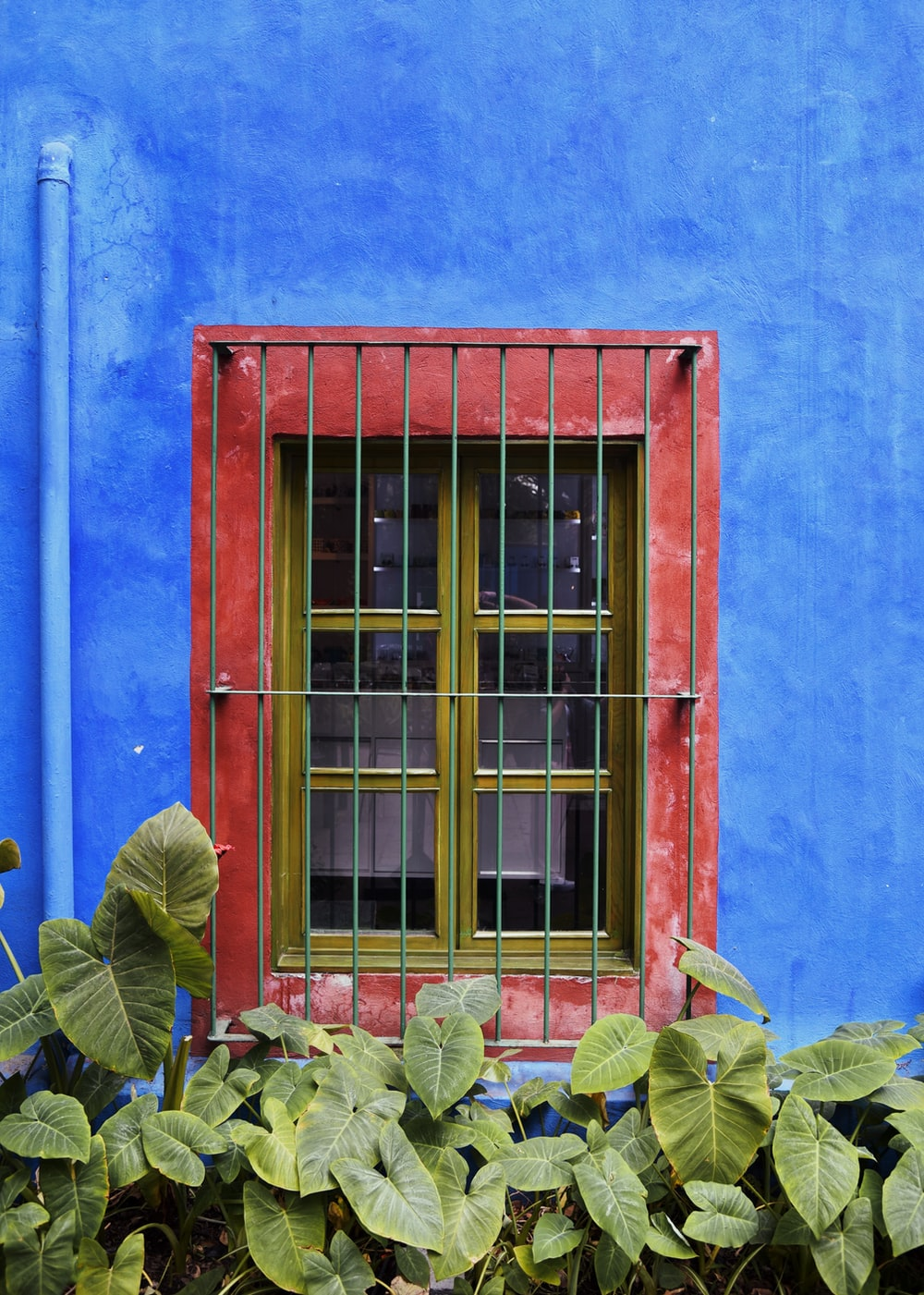 closed yellow window