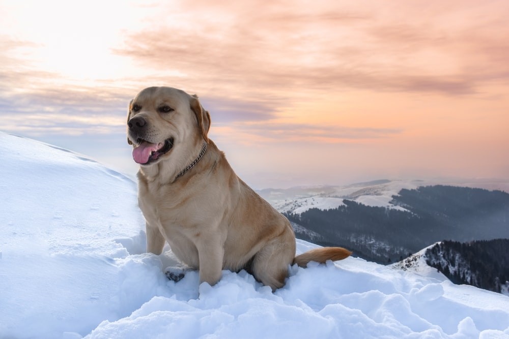 tan dog on snow covered ground