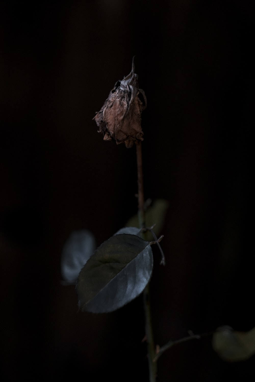 green leaf plant inside cave
