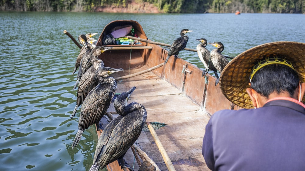 ducks perching on boat