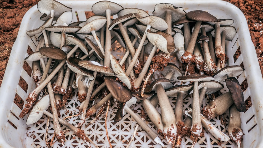 brown mushrooms on white plastic basket