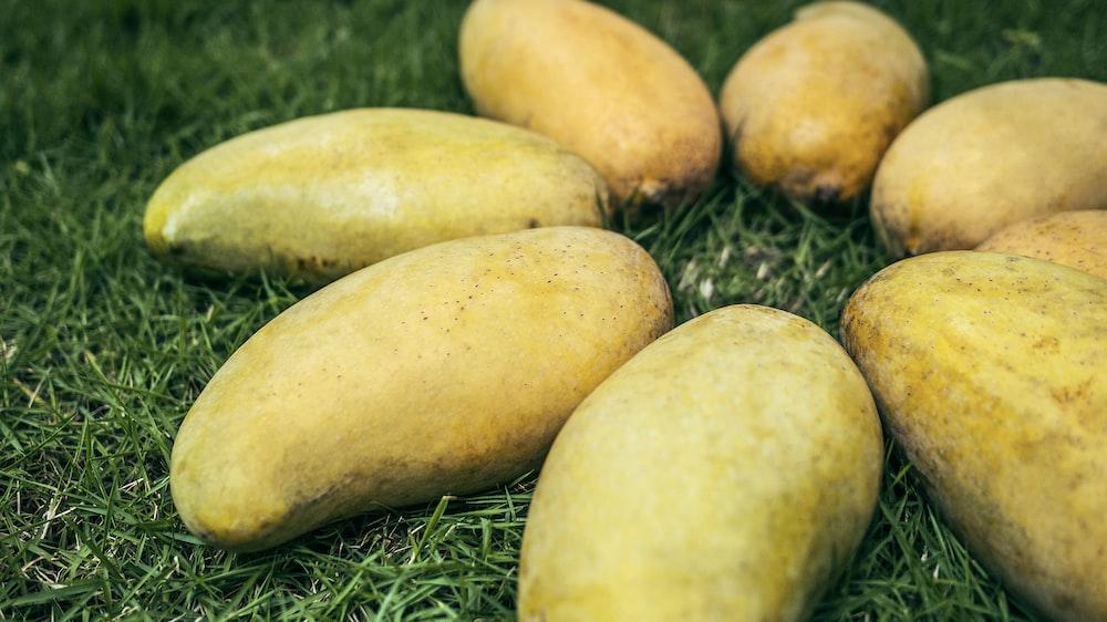 yellow mango fruits