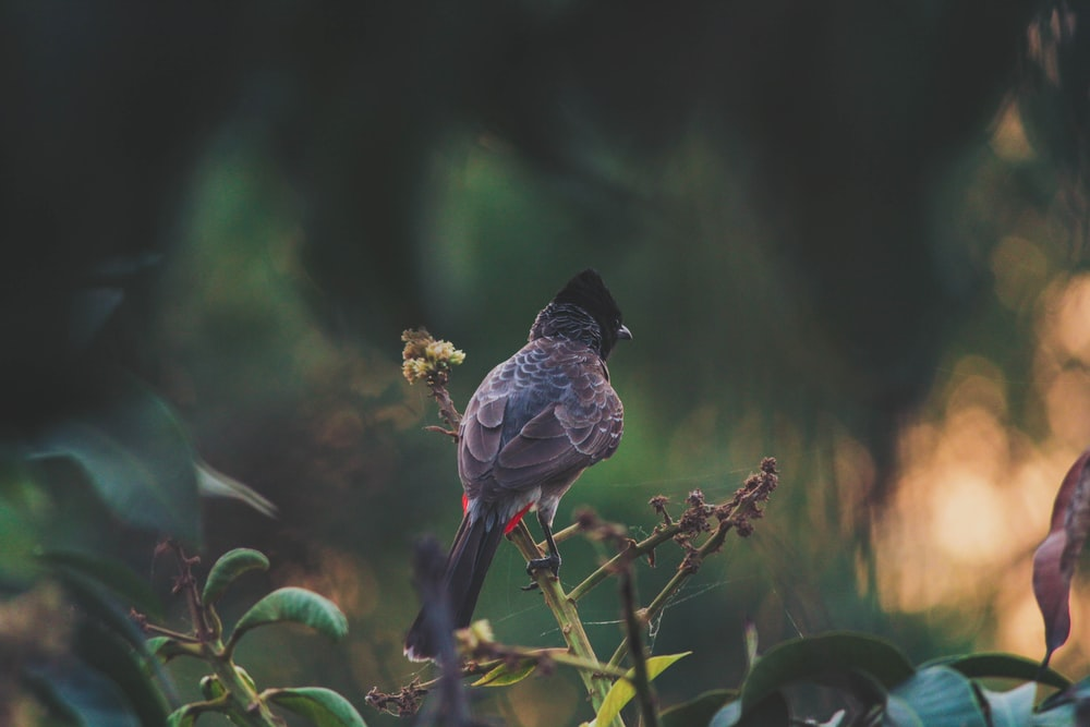 brown bird porches on plant branches