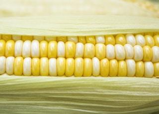 yellow and white corn