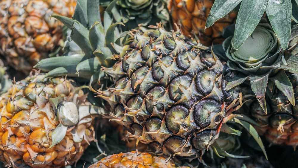 pineapple fruit close-up photography