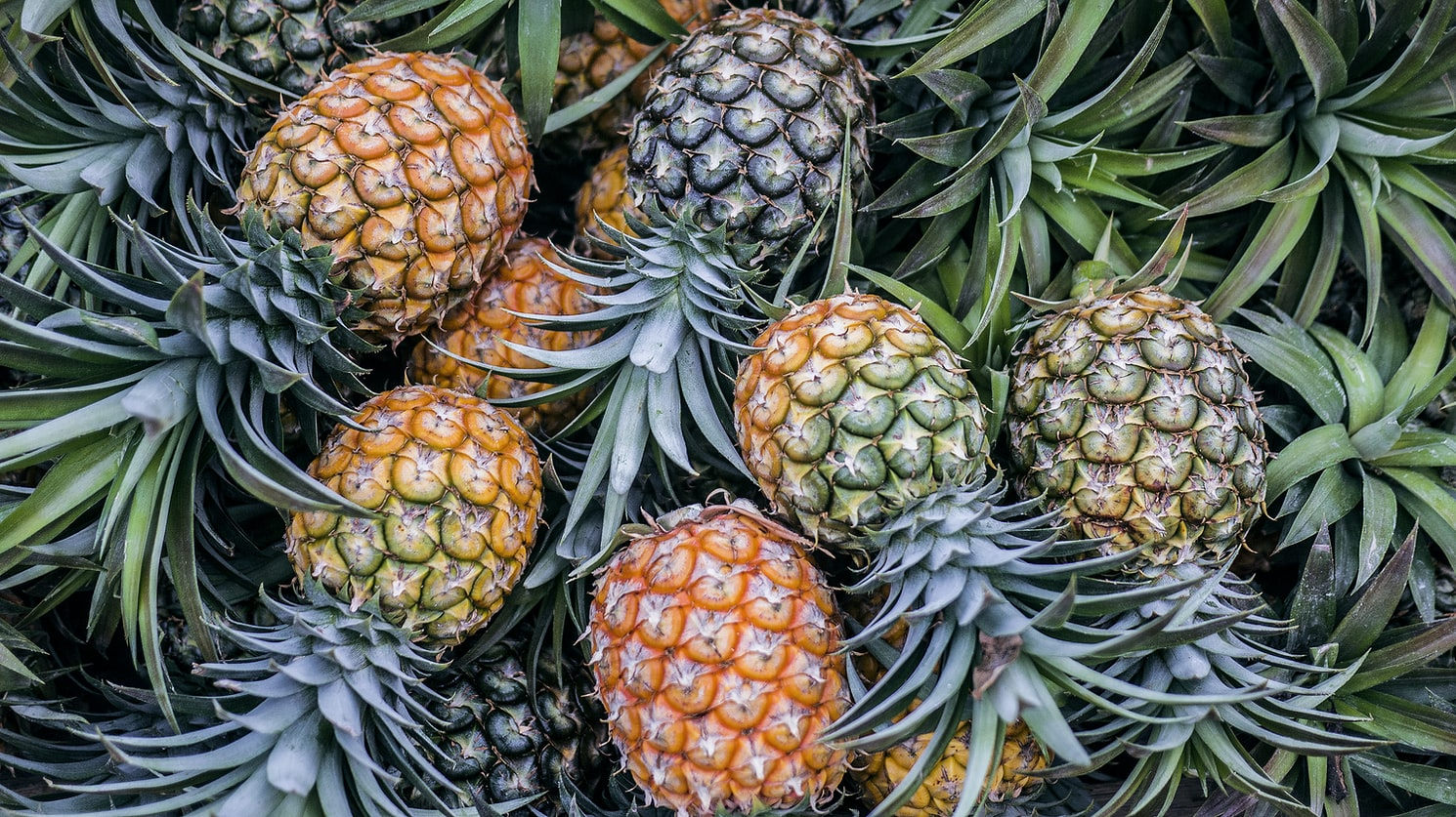 How long does it take for a pineapple to grow