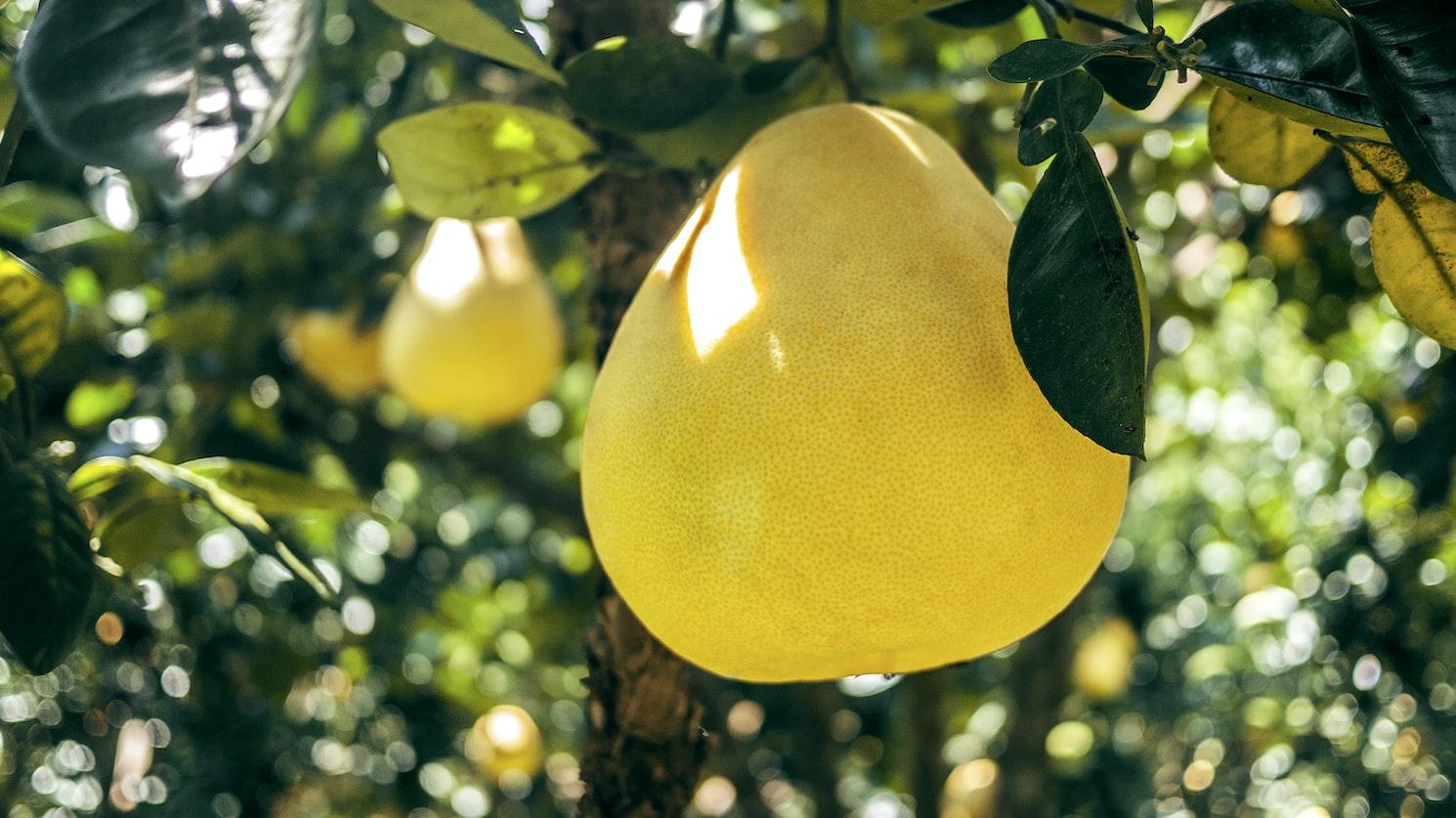 柚子配藥=身體狂竄毒!專家曝「3類水果」別碰:隔開吃也會出事   ETt
