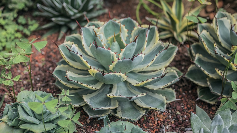 green succulent plant during daytime