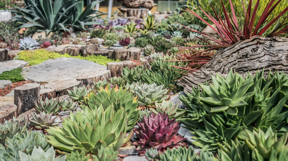 green and red succulent plants