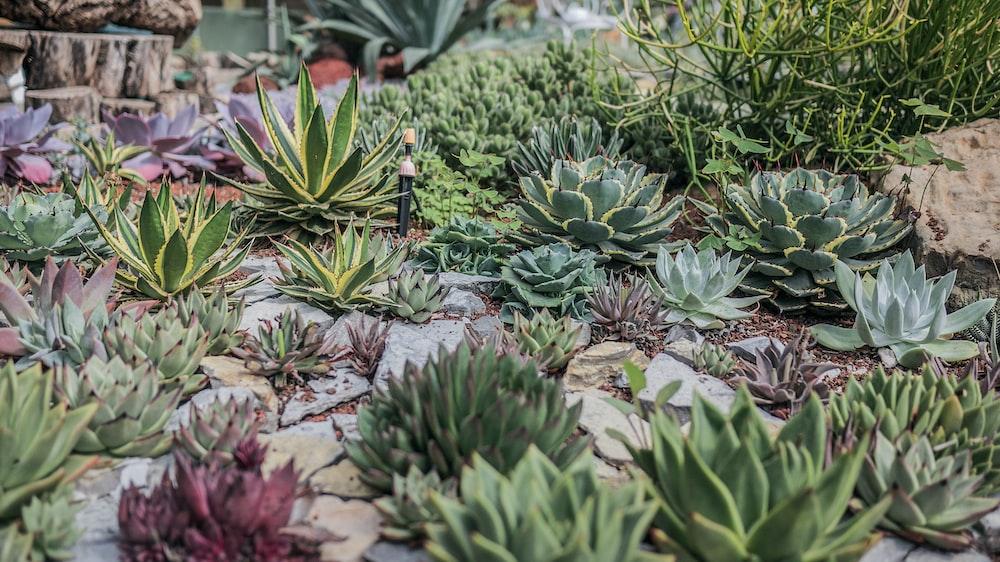 pile of succulent plants