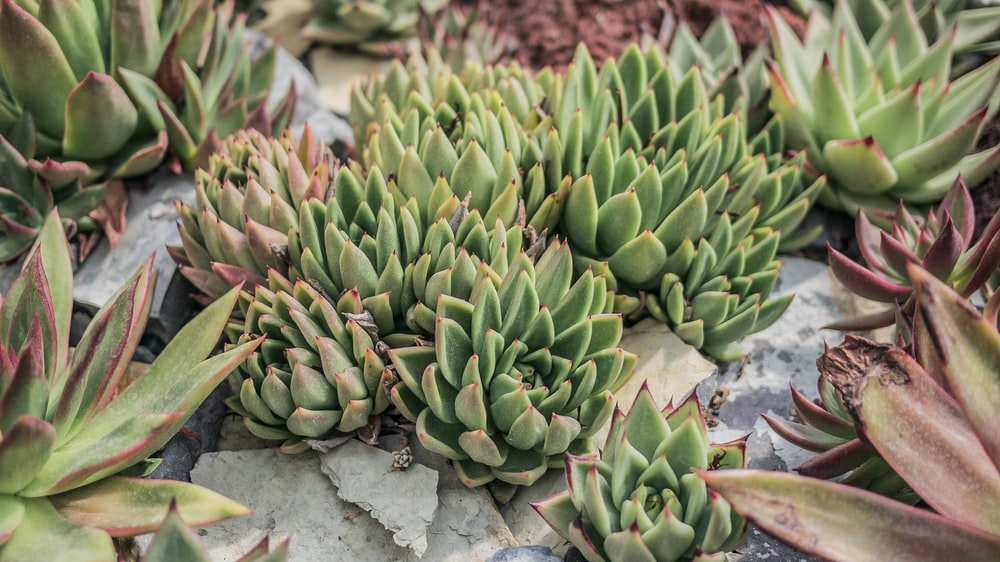 succulent plants during daytime