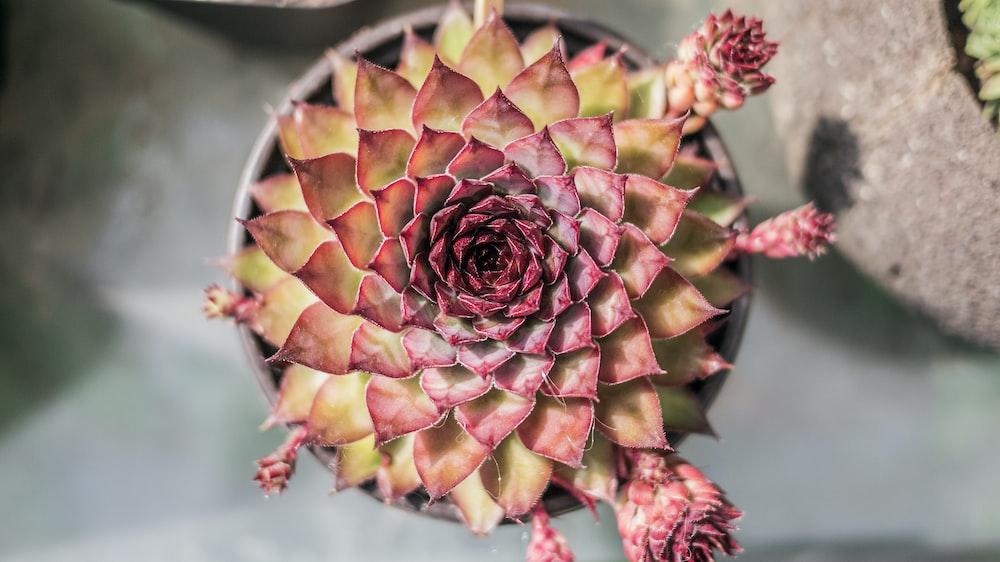 pink and orange succulent plants
