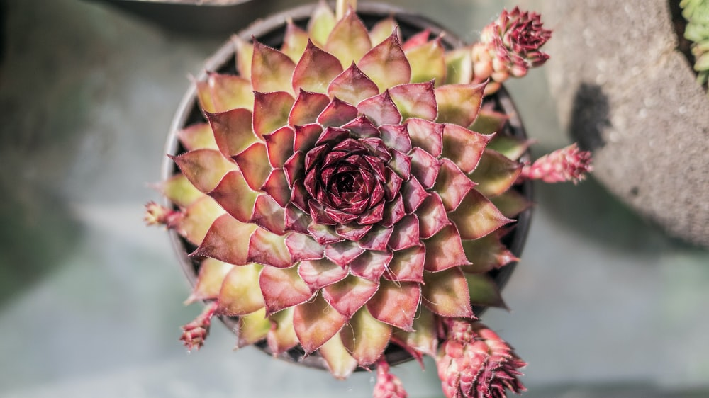 pink and orange succulent plants