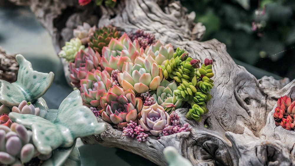 selective focus photography of green and orange succulent plants