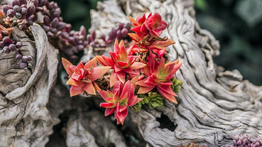 pink succulent plants