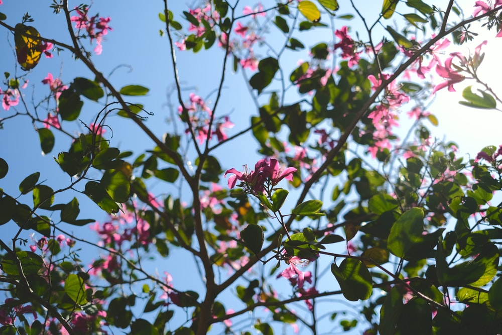pink flower with green leaf during daytime