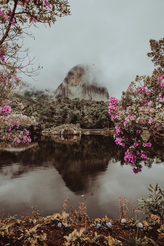 pink flowers lake