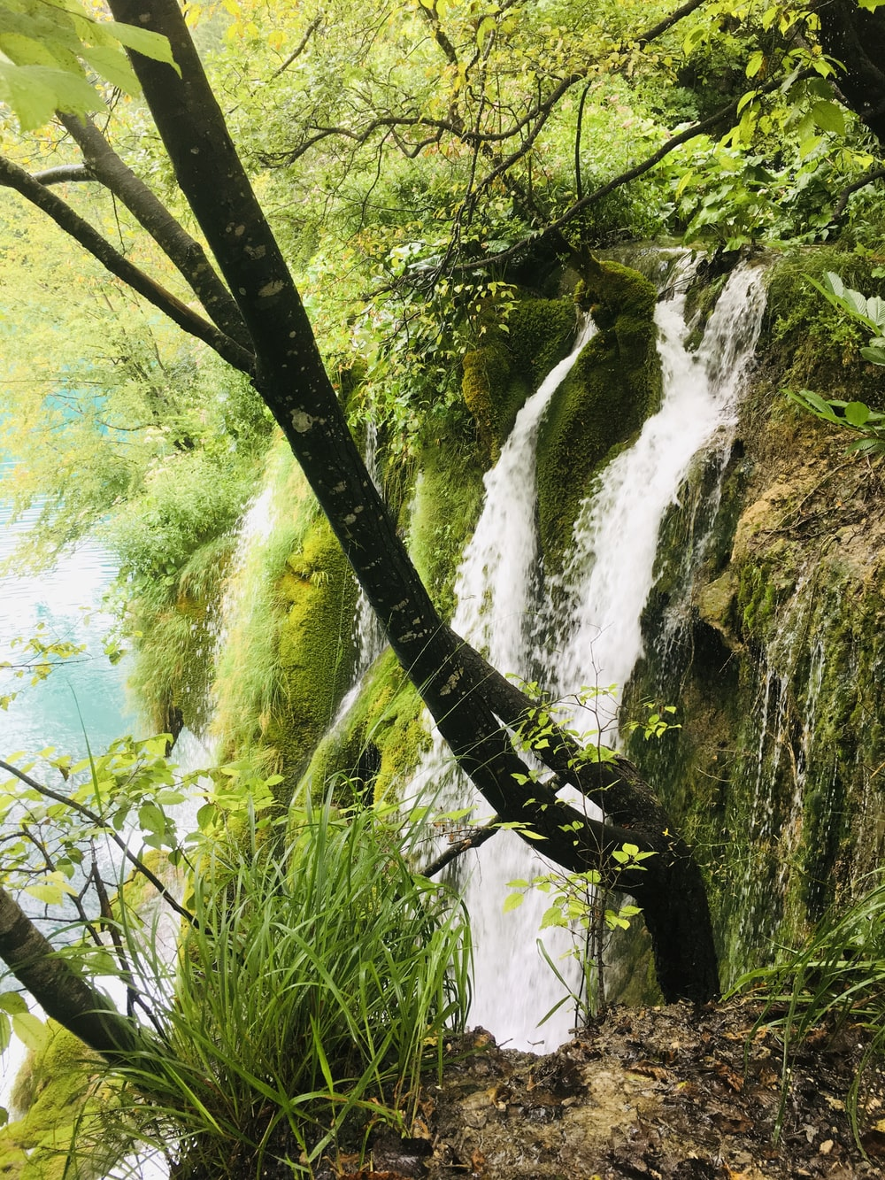 waterfalls surrounded with green trees