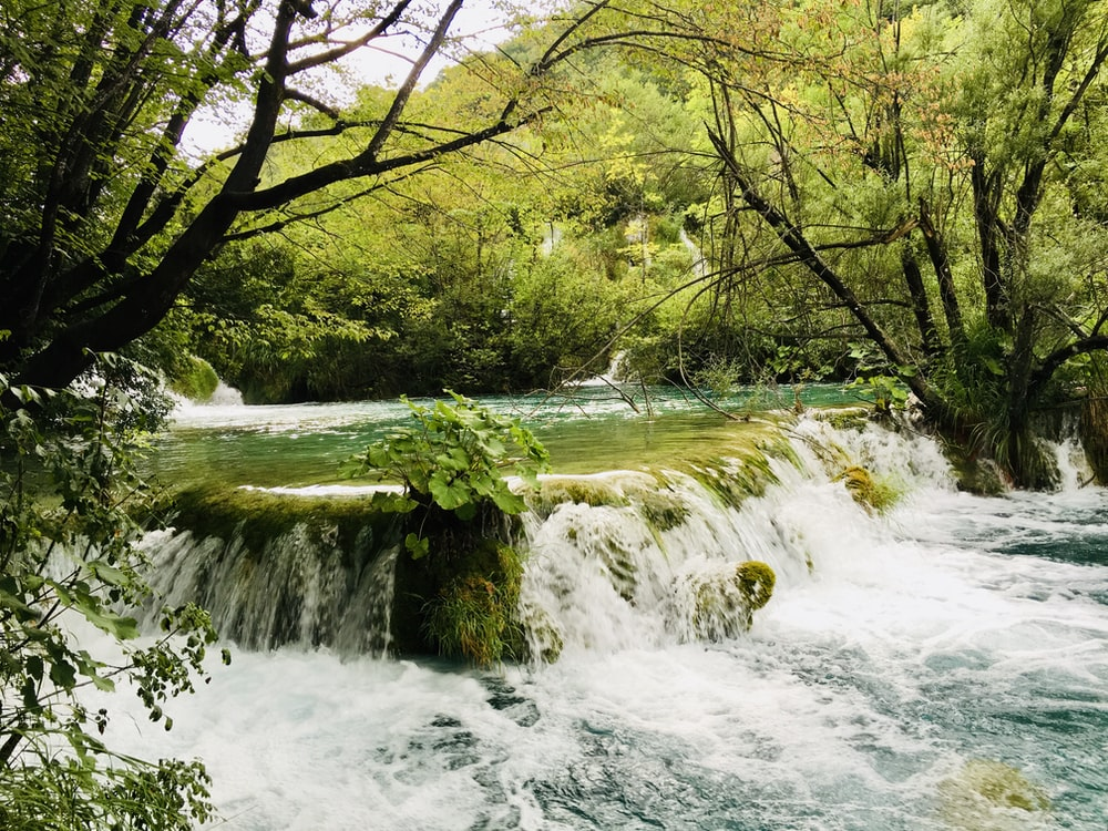 flowing river in between forest trees scenery photography