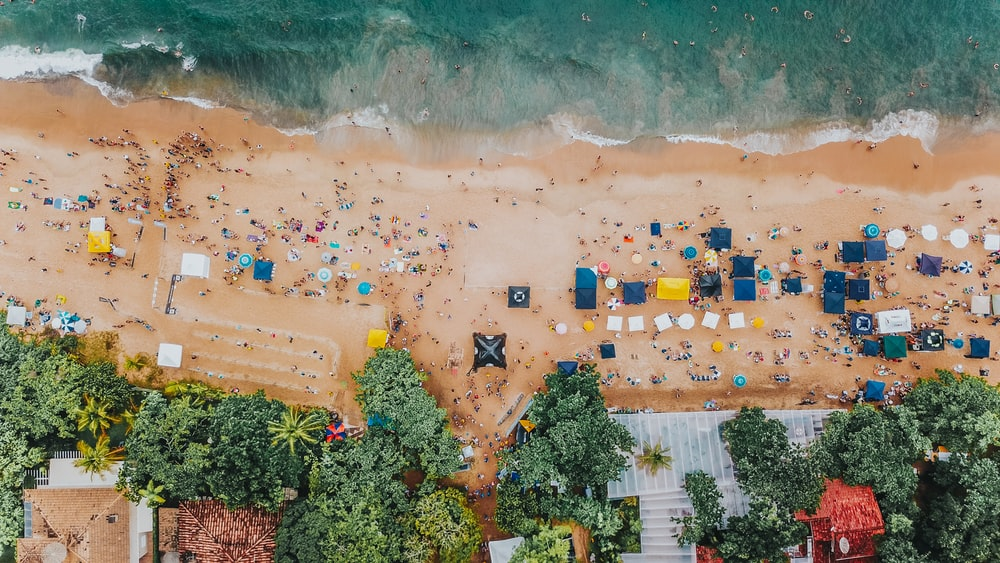 aerial photography of trees beside seashore during daytime
