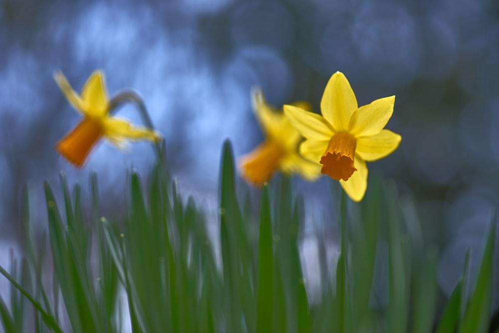 yellow petaled flwoers