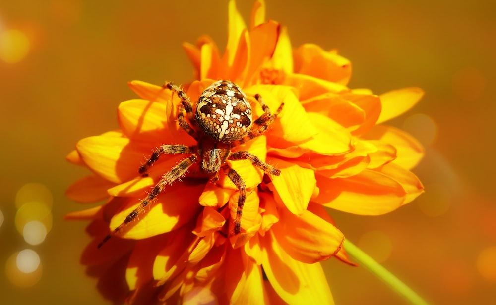 brown spider on yellow flower