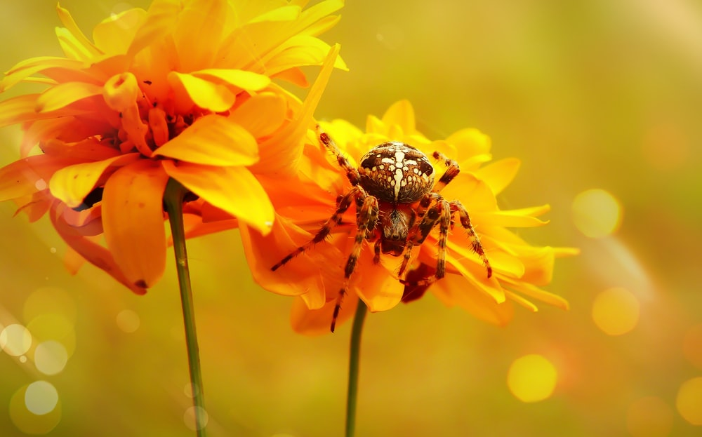 spider perching on yellow flower