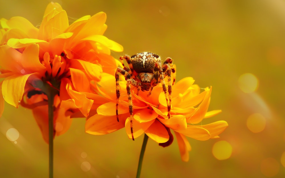 spider on yellow petaled flower