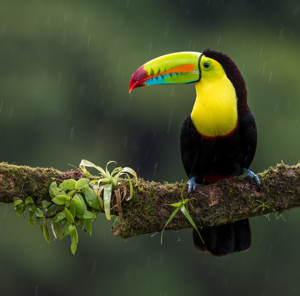 black and yellow bird on branch