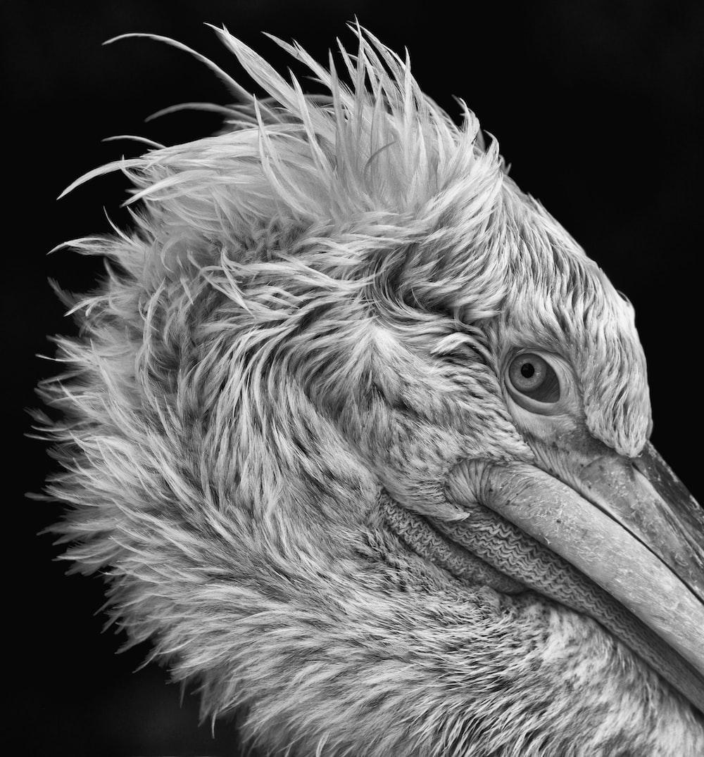 greyscale photo of big bird