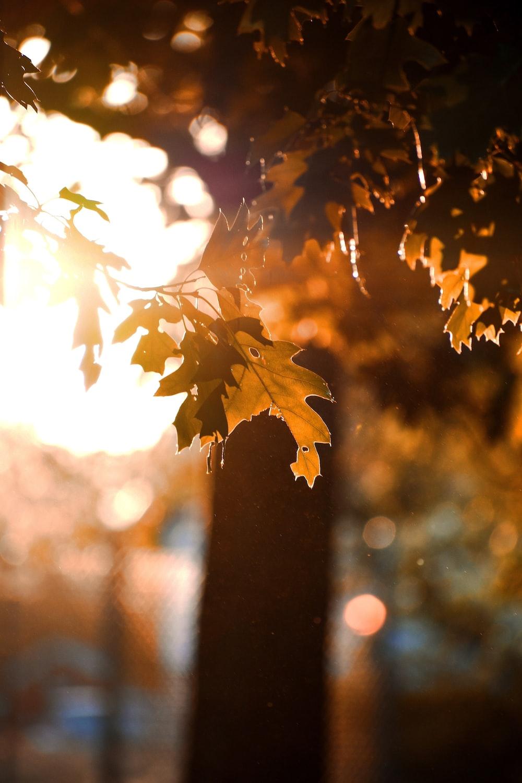 green leaf sunset