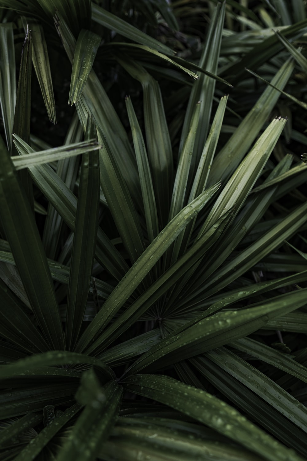 closeup photography of green linear leaf plants