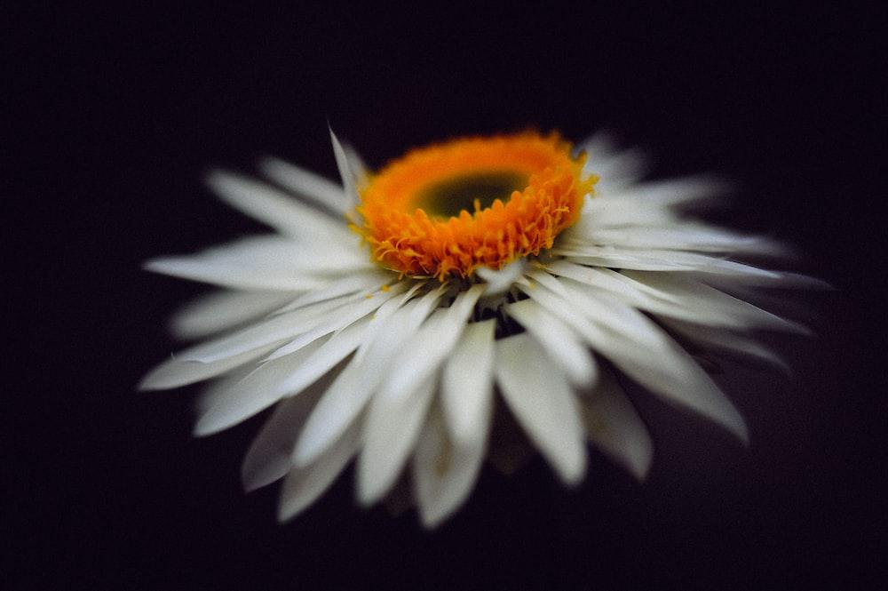 white petaled flower close up phoro