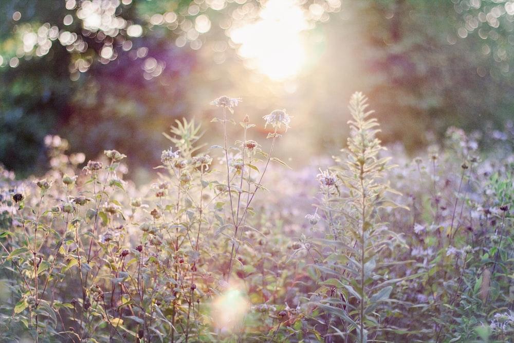 purple flowers field during daytime