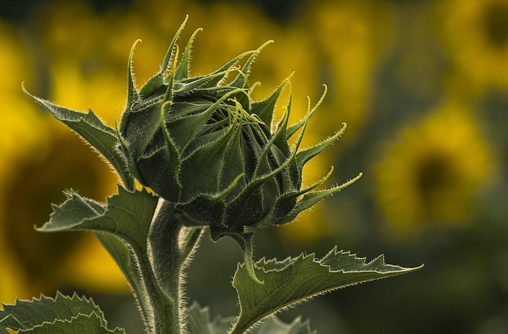 close-up photo of grene flower