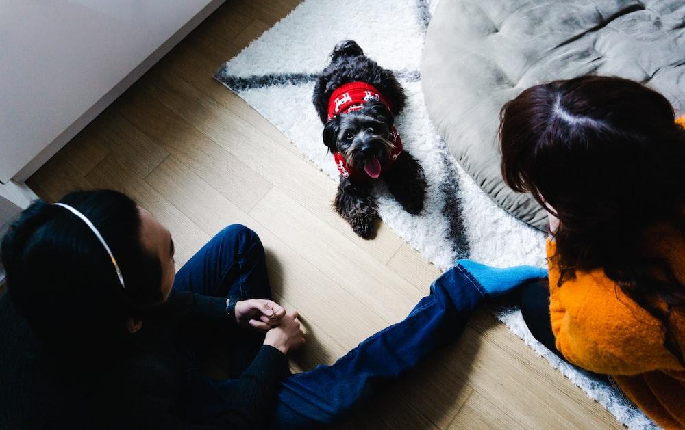 long-coated black dog lying on mat
