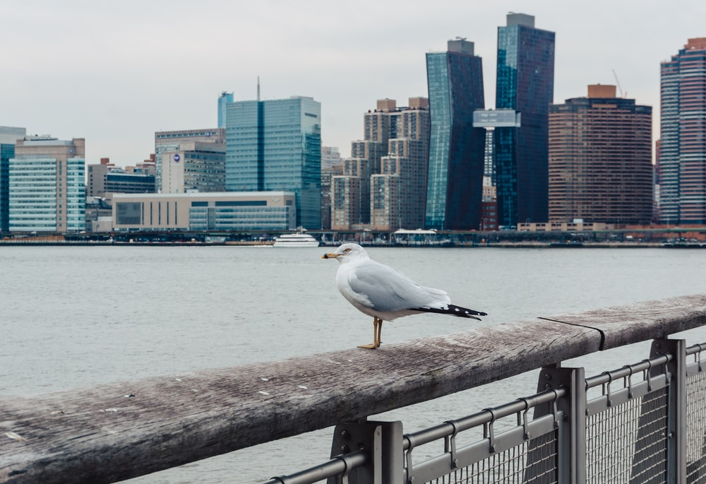 white seagull perching on brown handrail during daytime