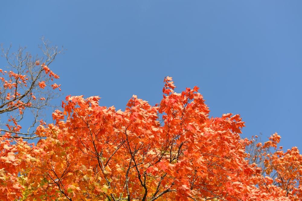 orange leafy tree during daytime