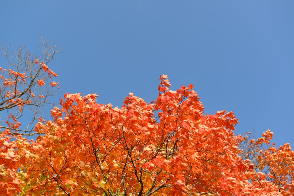 orange leafy tree during daytime