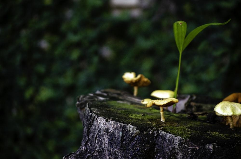 mushrooms on slab