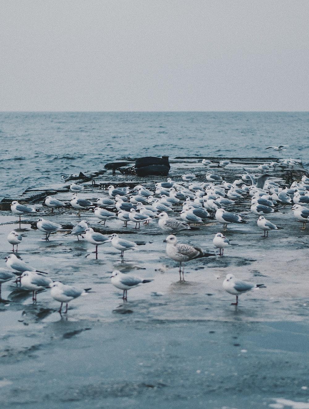 seashore with birds