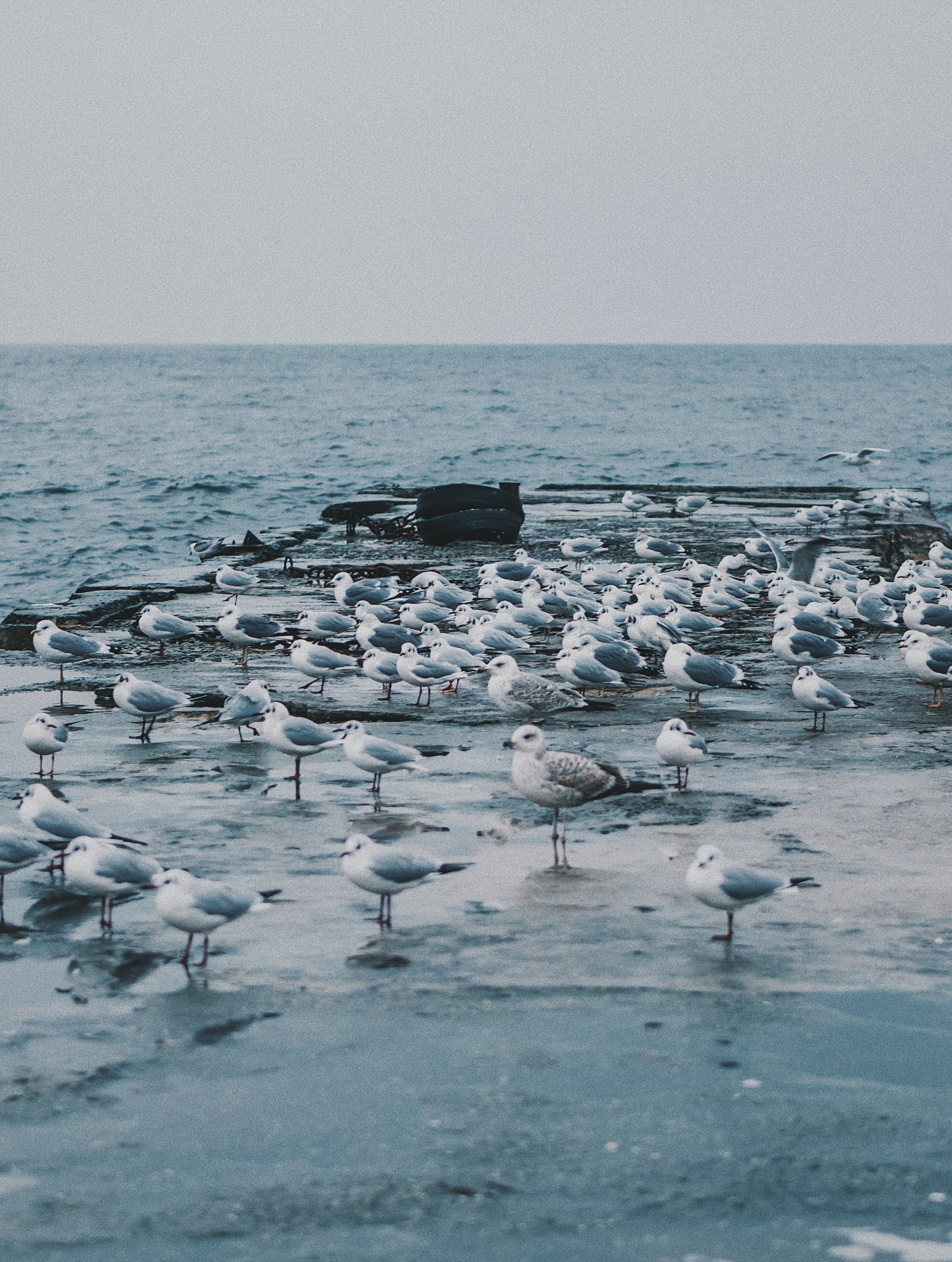 seashore with birds